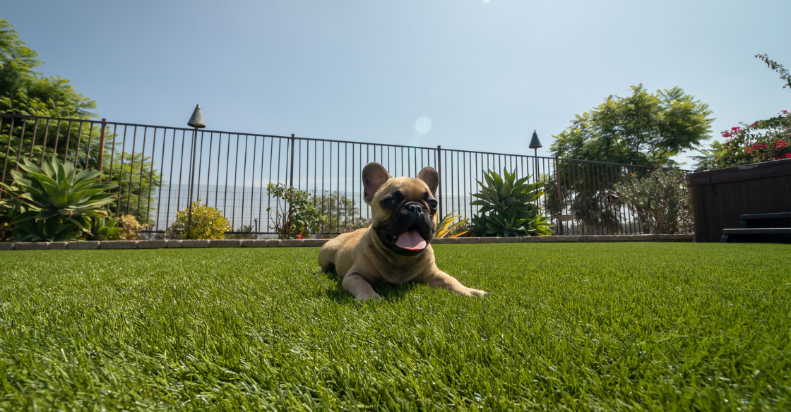 dog laying down in yard with artificial turf