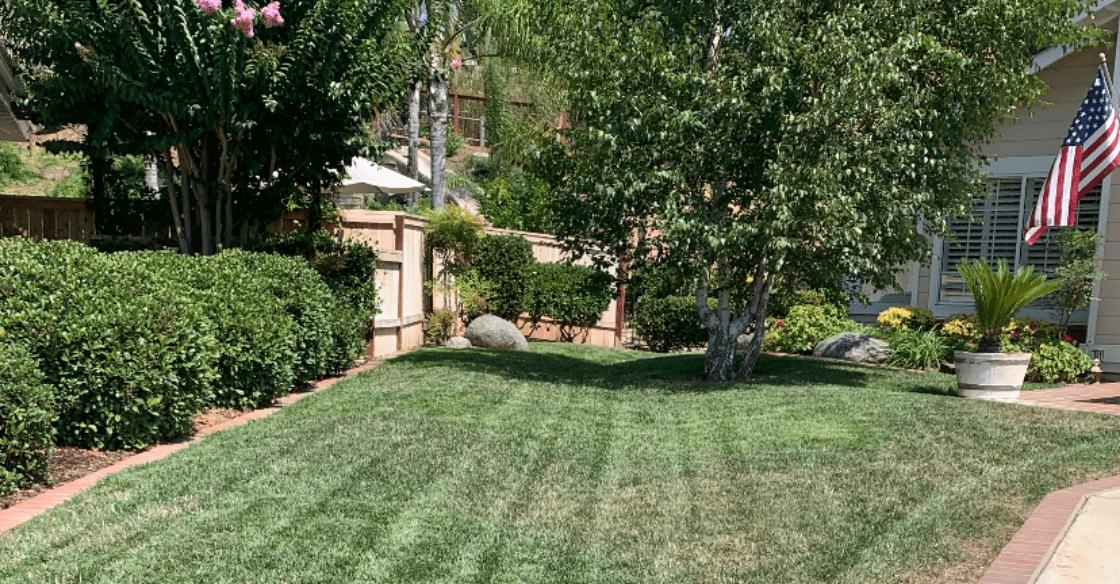 Bill's yard before US Turf