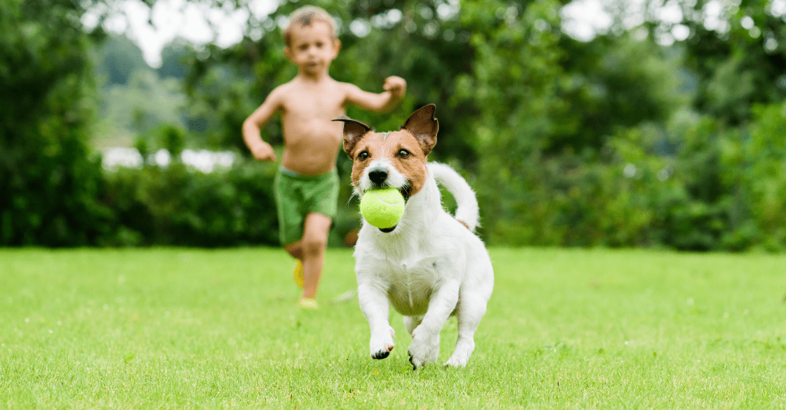 child and dog playing in the yard