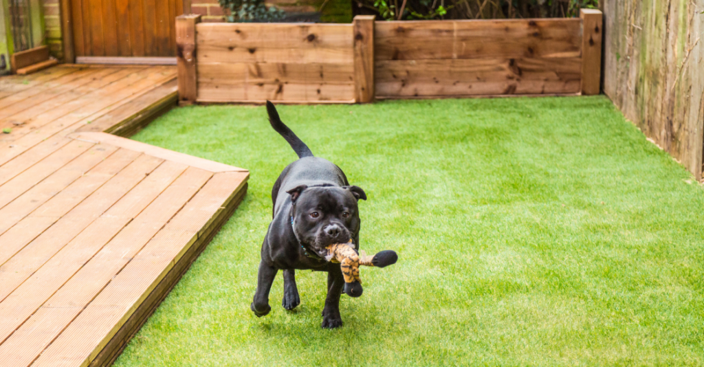 Dog playing in a yard with artificial grass